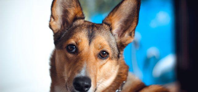 Augusztus 20. – A tűzijáték miatti óvintézkedésekre figyelmezteti a kutyatartókat a Nébih