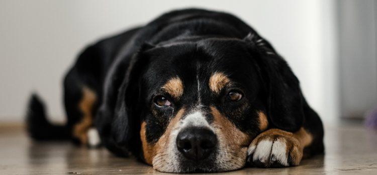 Augusztus 20. – A tűzijáték miatti óvintézkedésekre figyelmezteti a kutyatartókat a főváros rendészeti igazgatósága