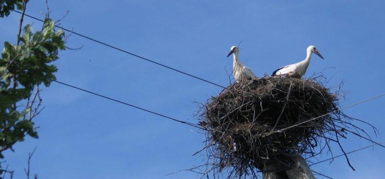 Több mint ötven villanyoszlopot alakítottak át madárbaráttá a Gemencben