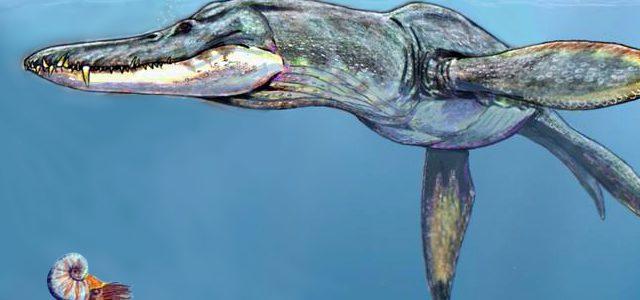 Százötvenmillió éves tengeri ragadozó fosszíliájára bukkantak Lengyelországban