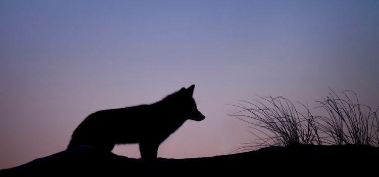 Rejtély a tudósok számára, hogy farkas vagy kutya a 18 ezer éves kölyöktetem