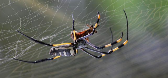 """""""Aggasztóan"""" fogynak a rovarok és a pókok Németországban"""