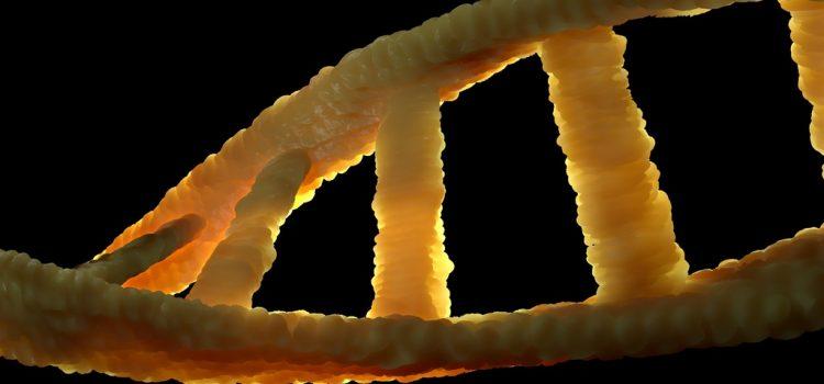 Nem a szülők génjein múlik, hogy milyen nemű gyerekek születnek egy ausztrál kutatás szerint