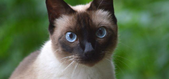 A lajhármaki mérge segíthet megérteni, miért allergiás sok ember a macskákra
