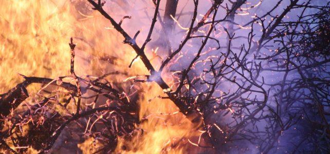 Ausztrál tűzvész – Az erdők ötödét elpusztították a bozóttüzek Ausztráliában