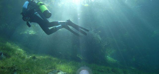 A víz alatti erdők genetikai sokféleségére jelenthetnek fenyegetést az óceáni hőhullámok