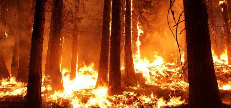 Nem pusztult el több erdő tavaly az Amazonas térségében a tűz miatt, mint átlagosan az elmúlt 17 évben